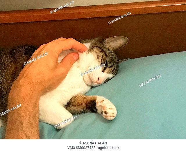 Man' s hand stroking a sleepy cat