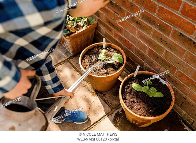 Boy watering seedling in flower pot