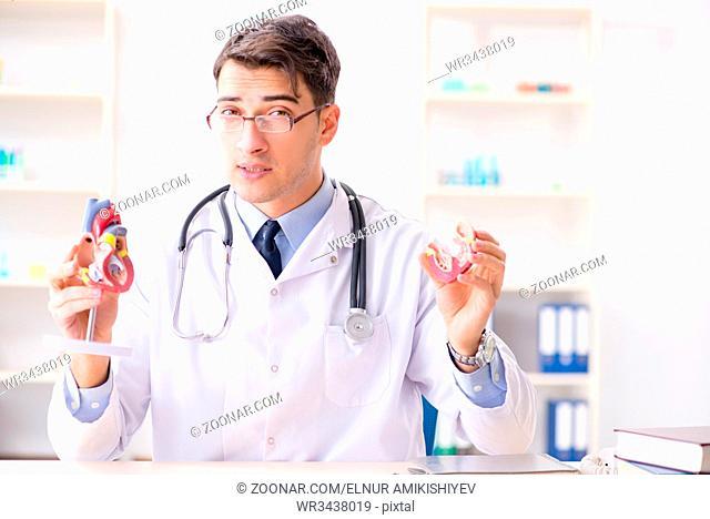Doctor lecturer explaining the heart model