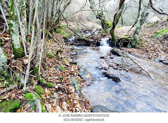 Dehesa stream in the Sierra Norte. Madrid. Spain. Europe