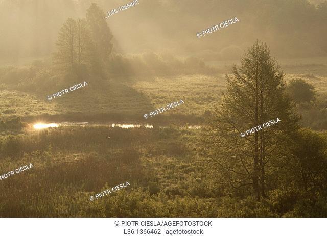 Bialowieza Forest UNESCO World Heritage Site Eastern Poland