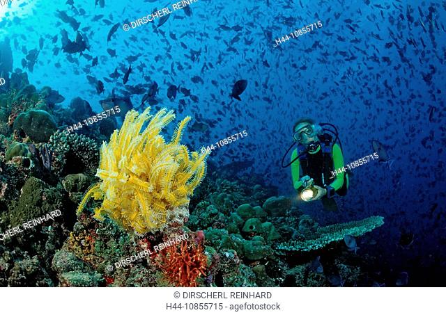 10855715, Maldives, Indian Ocean, Meemu Atoll, tri