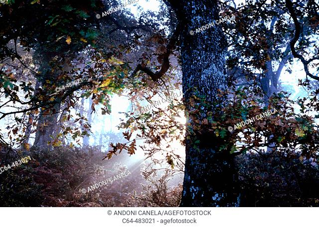 Irati Forest. Pyrenees. Navarra. Spain