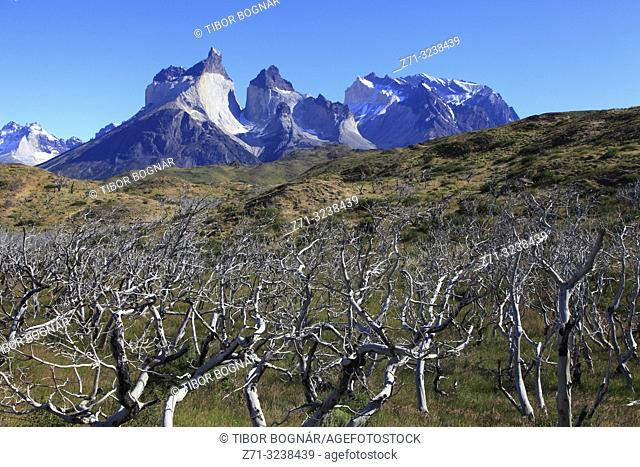 Chile, Magallanes, Torres del Paine, national park, Cuernos del Paine,