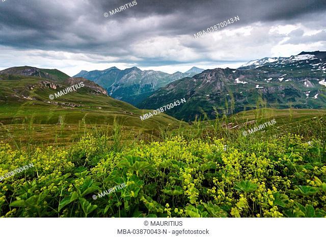 Wild flowers, storm, mountains, Schaflegerkopf, national park, High Tauern Austria