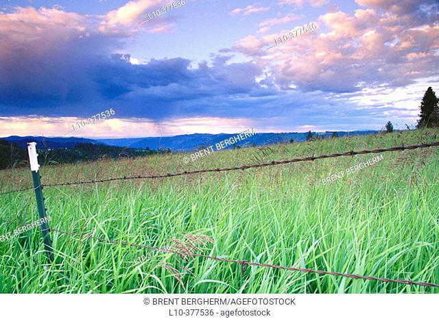 Barbed wire fence along grassy field. Weippe Valley. Clearwater County. Idaho. USA