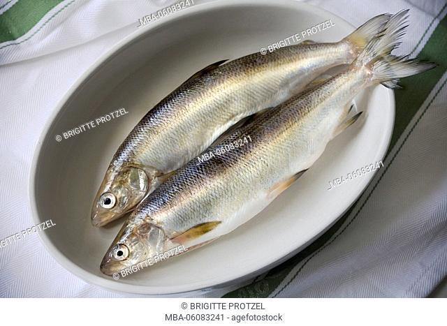 Two lake whitefishes in porcelain pan