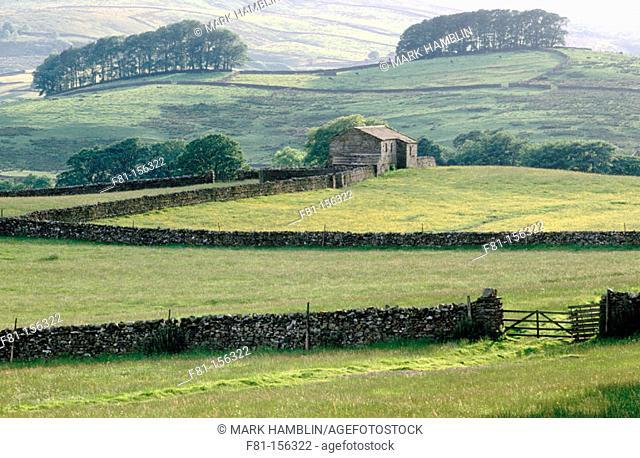 Wensleydale. Yorkshire Dales NP. North Yorkshire. England