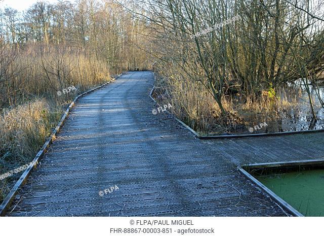 Frosted boardwalk in wetland habitat, Askham Bog Nature Reserve, near York, North Yorkshire, England, January