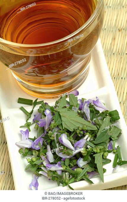 Barbed Skullcap tea, Scuttellaria barbata