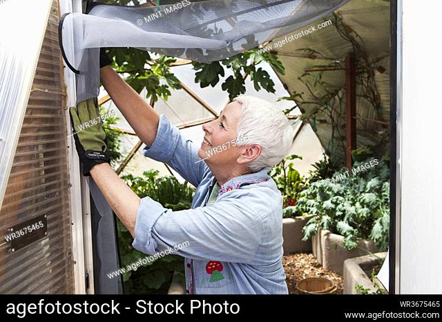 Smiling senior woman gardening in a geodesic dome, climate controlled glass house