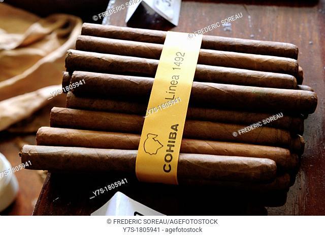 Cigar cohiba in Cuba