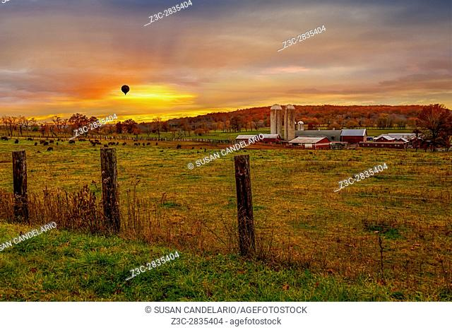 Buffalo Farm Sunset - Red barns and grain silos with buffalos feeding in the field, a hot air balloon and the mountain range in the background with fall foliage...