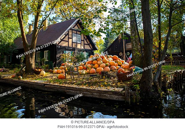 15 October 2019, Brandenburg, Lübbenau/Spreewald: Numerous pumpkins lie on the riverbank on a property between Lübbenau and Lehde in the Spreewald