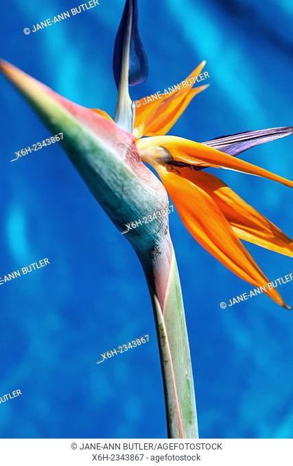 spectacular flower shape - bird of paradise