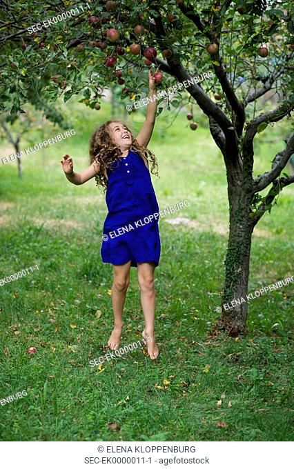 Italy, Girl (10-12) picking apples