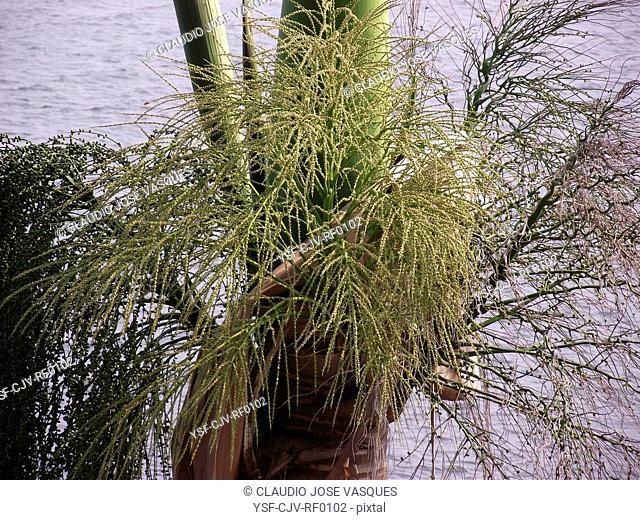 Palm, plant, Rio de Janeiro, Brazil