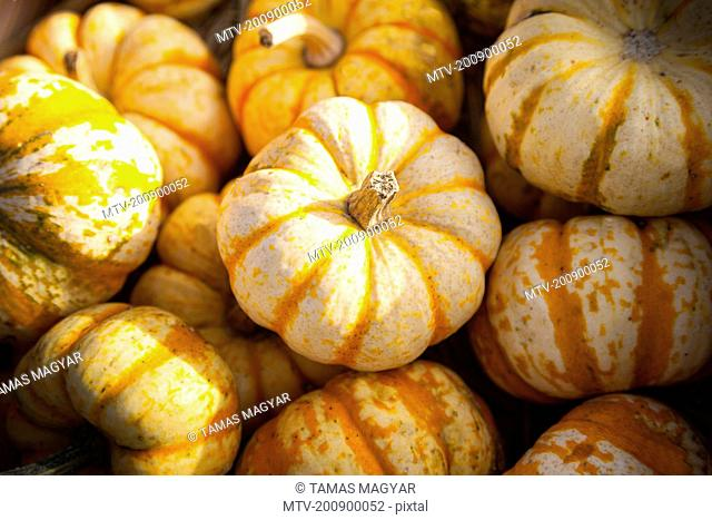 Pumpkins (Cucurbita) on sale for Halloween, Bavaria, Germany