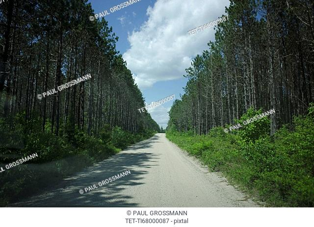 View of empty dirty road amidst forest