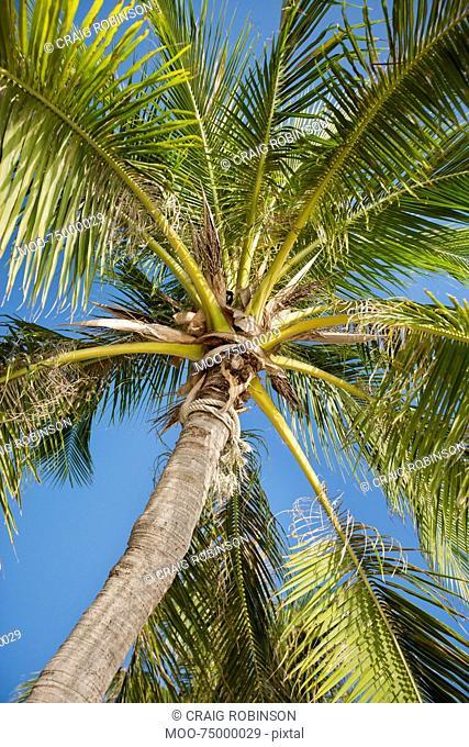 Palm tree against clear sky, Koh Pha Ngan, Thailand