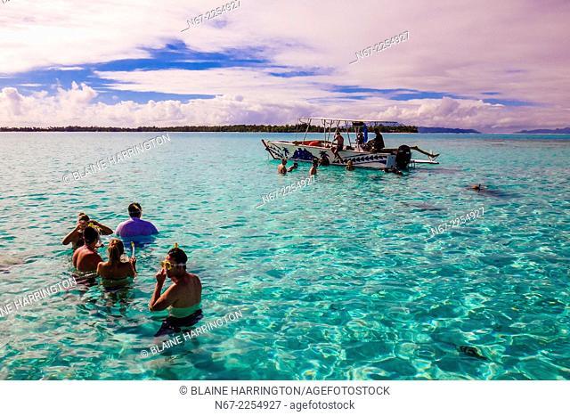 Swimming with stingrays off the island of Bora Bora, Society Islands, French Polynesia