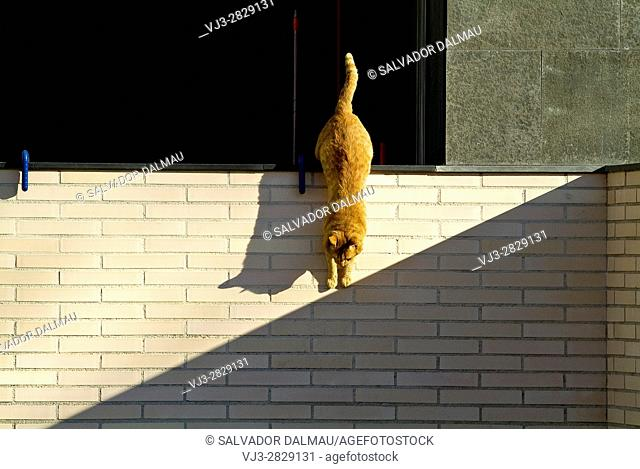 cat playing with the shadows,location banyoles,girona,catalonia,spain,