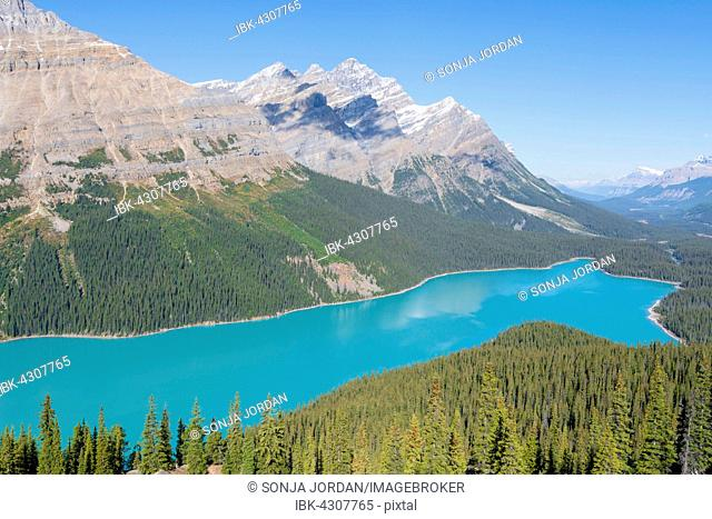 Turquoise glacier Peyto Lake, Banff National Park, Canadian Rockies, Alberta Province, Canada