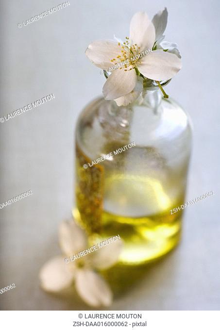 Mock orange flowers and bottle of massage oil