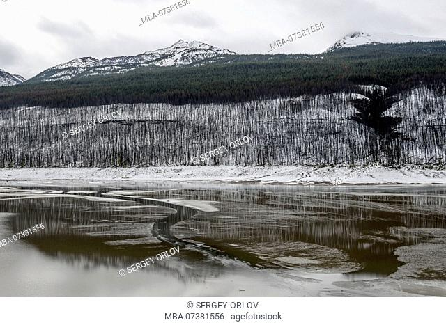 Medicine lake, Alberta, damage, dead, forest, site of fire, skeleton, river
