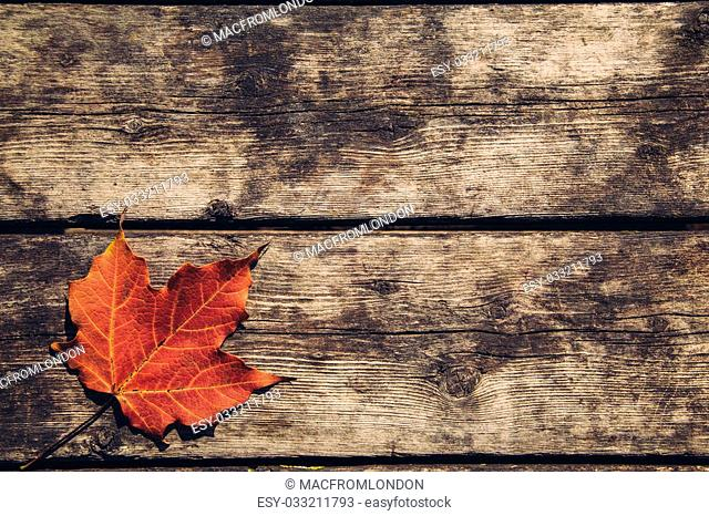 Red Maple Leaf on a Wood Surface Background with space for text