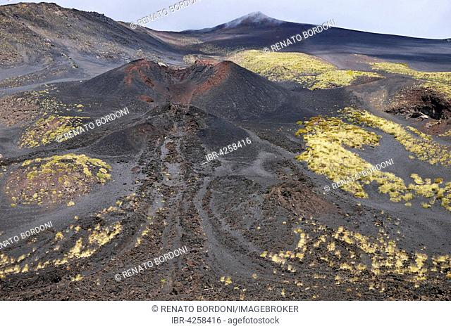 Black lava with vegetation at the crater La Montagnola, Mount Etna, Sicily, Italy