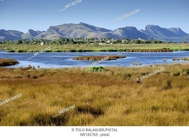 Reserva natural de l'Albufereta, bahia de Pollensa , Mallorca, balearic islands, Spain