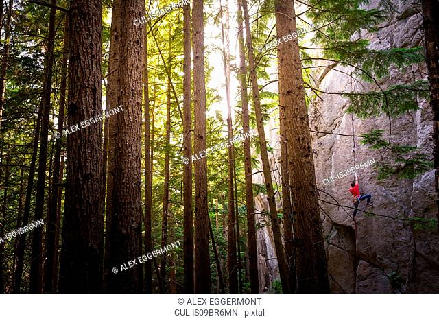 Rock climber scaling rock face close to trees, Squamish, Canada