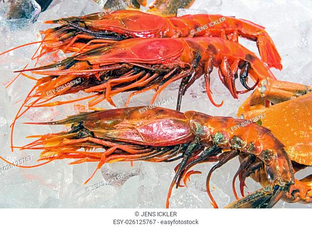 king prawns for sale at the fish market
