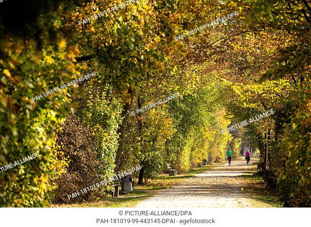 19 October 2018, Bavaria, Nürnberg: Joggers run under trees coloured in autumn. Photo: Daniel Karmann/dpa. - Nürnberg/Bavaria/Germany