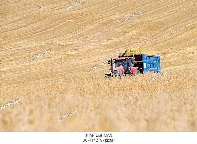Tractor With Oats Harvested For Silage And Biofuel
