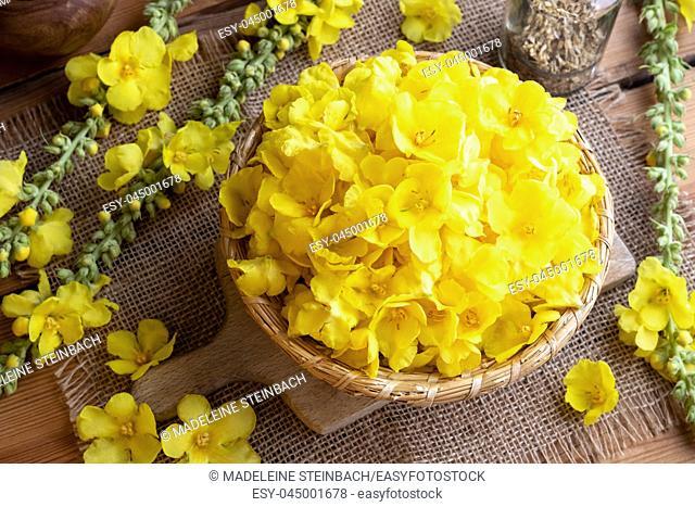 Fresh denseflower mullein flowers in a wicker basket