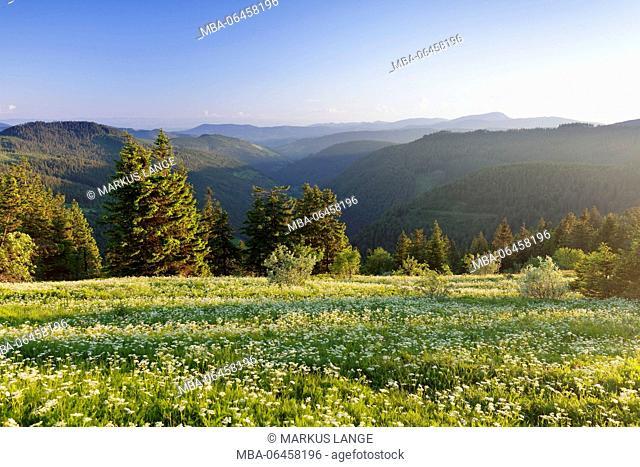 View of the Feldberg in the Großes Wiesental (meadow valley), Black Forest, Baden Württemberg, Germany