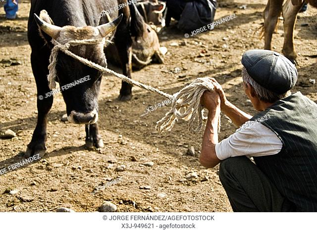 Man trying to sell a cow, animal market  Karakol, Kyrgyzstan