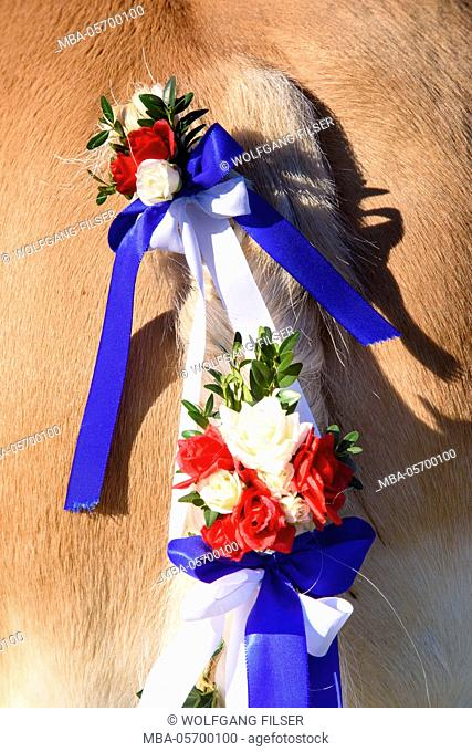 decorated horse's tail, close up, Leonhardifahrt in Murnau to honour of the holy St. Leonhard, patron saint of the horses