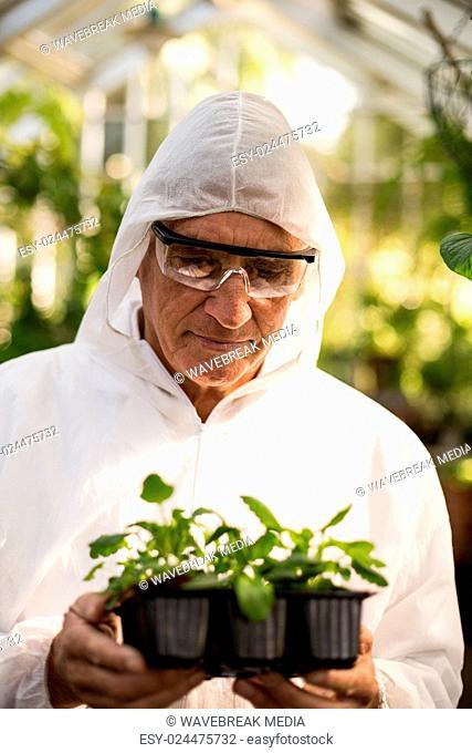 Male scientist in clean suit examining saplings