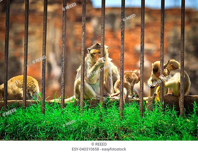 Monkeys are curious,Lopburi Province, Asia Thailand