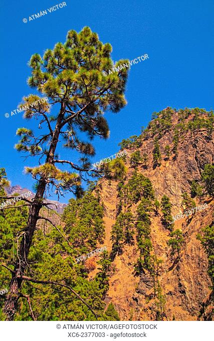 Caldera de Taburiente National Park. La Palma island . Canary islands . Spain