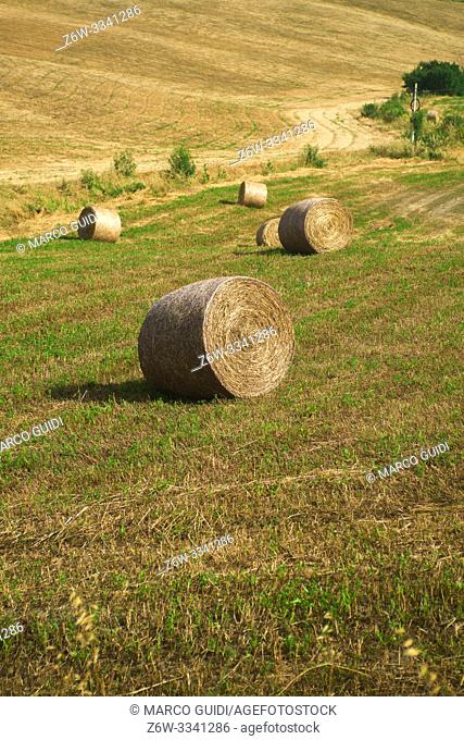 In the Tuscan countryside in the summer during the hay harvest