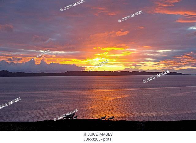 Scenic view of sunset over sea with jumping sheep