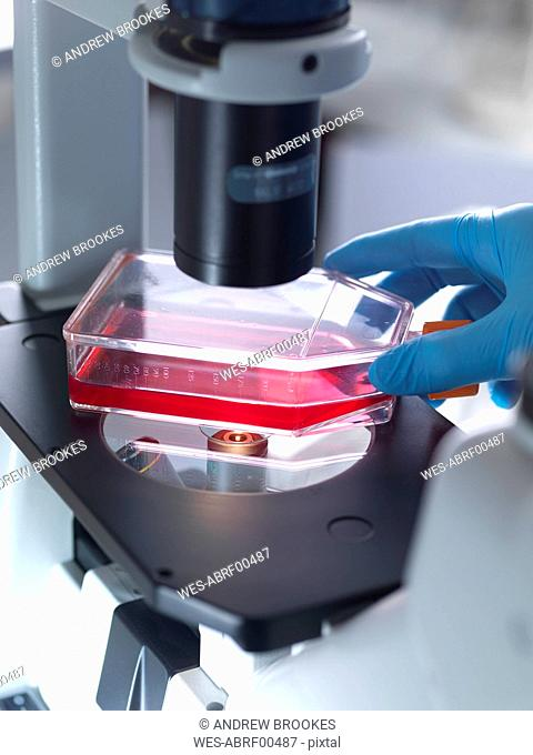 Cropped hand of male biologist placing flask containing stem cell in microscope at laboratory
