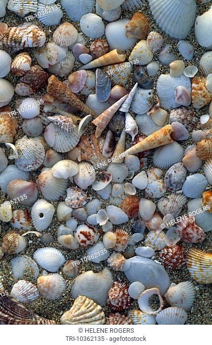 Shells Frigate Bay Beach St Kitts