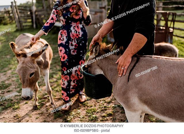 Couple feeding pet donkeys