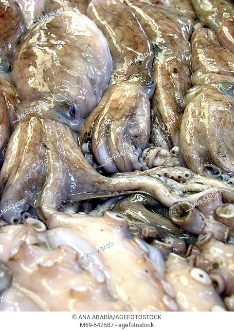 Octopuses at market. Vinaroz. Castellon province. Spain