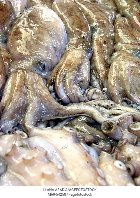 Octopuses at market. Vinaroz. Castellon province. Spain